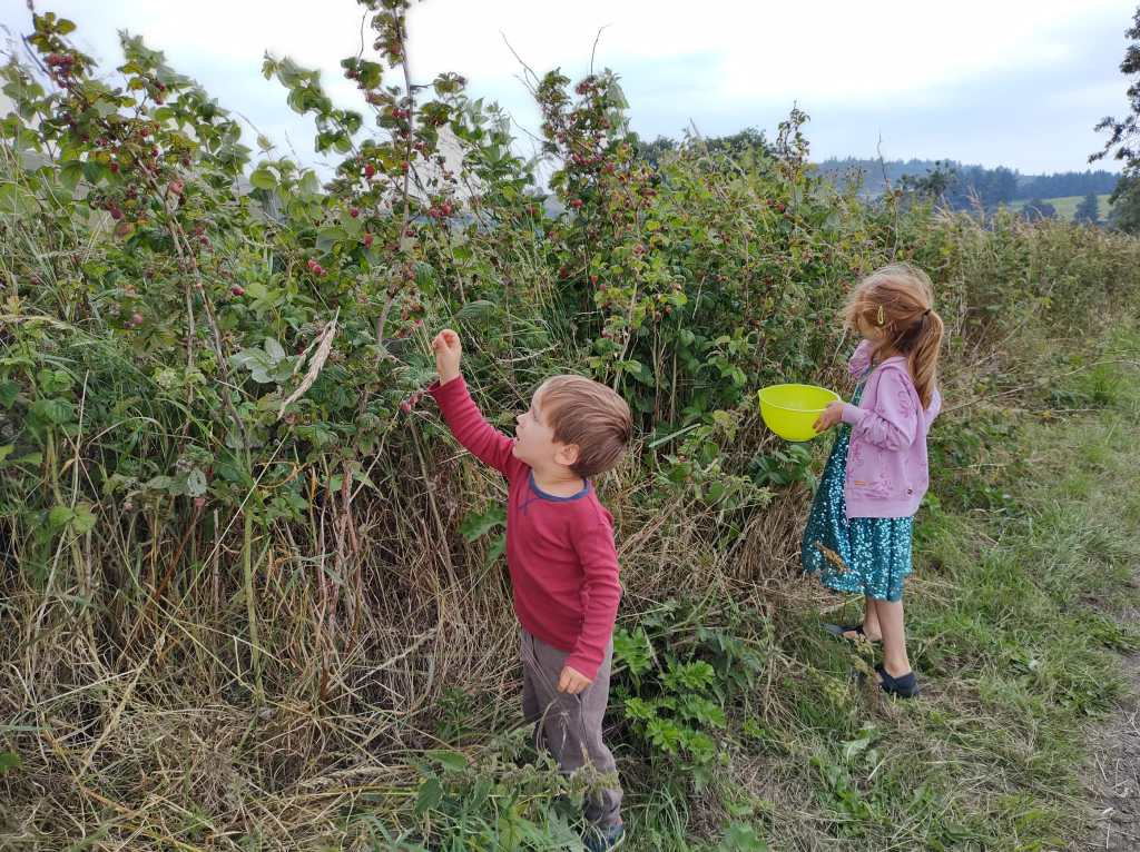 Photo of kids foraging for raspberries