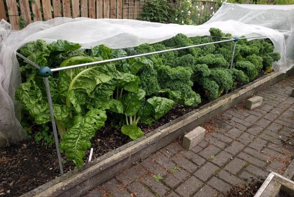 No dig gardening post 1 kale bed