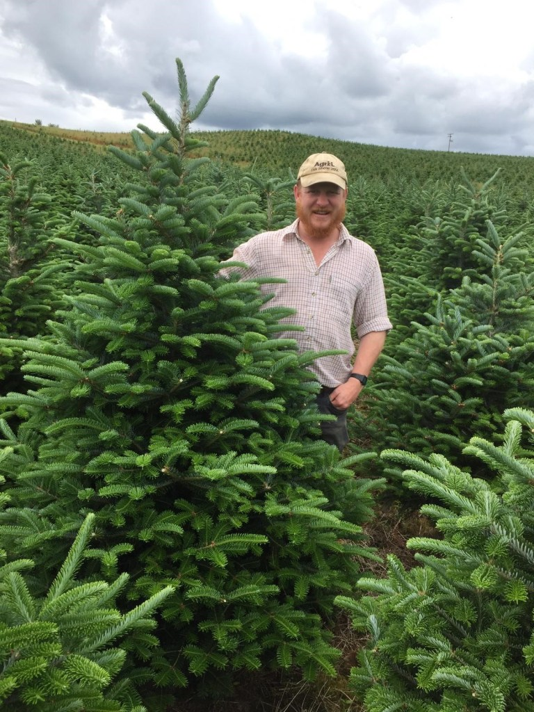 Man standing in a field of Christmas trees