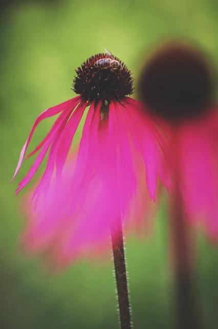 ..und pink :)