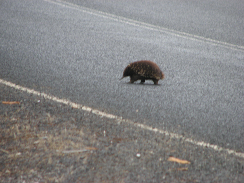 tasmania-2009-230