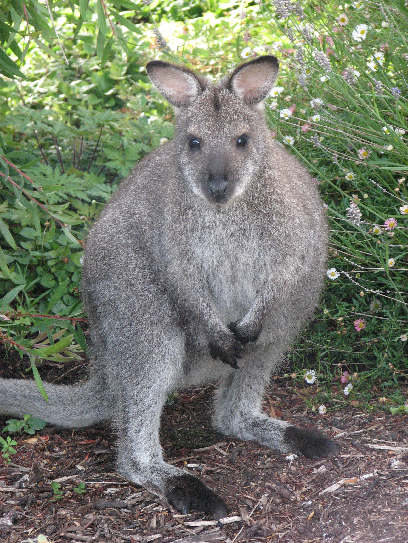 tasmania-2009-260