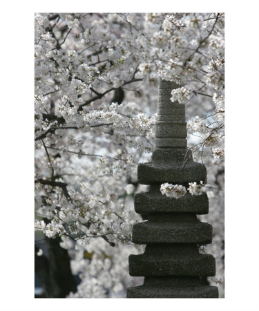 1978207echerry-blossom-with-japanese-pagoda-posters