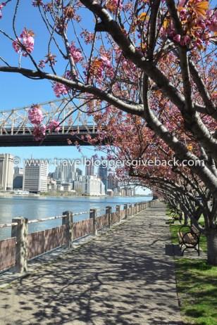 25 -Roosevelt Island, New York, USA Kohteena Maailma Roosevelt Island, New York, USA: Kevättä rinnassa. Kaupunkikävelyllä puolison kanssa maailman upeimmassa kaupungissa.