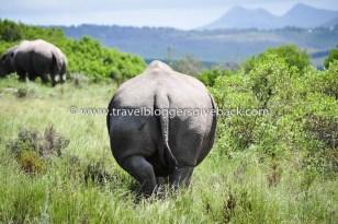 27 - Etelä-Afrikka Rento Matkablogi Etelä-Afrikka: Sarvikuonot ovat eräitä Etelä-Afrikan jylhimmistä eläimistä. Niitä pääsee ihastelemaan monissa luonnonpuistoissa ympäri maan. Tämä yksilö Plettenberg Bayssa Garden Routen varrella katsasteli meitä tovin kunnes tyynen rauhallisesti käänsi ahterinsa näkyviin ja tallusti pois. Asennetta piisasi. Myynnissä myös valmiina tauluna!
