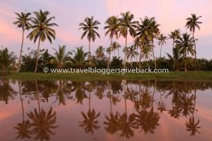 29 - Kerala, Intia Mangostania Kerala, Intia: Keralan Kumarakomissa hotellimatka taittui kanavia pitkin veneellä. Tunnelma oli unohtumaton, kun laskeva aurinko värjäsi maiseman vaaleanpunaisella. Myynnissä myös valmiina tauluna!