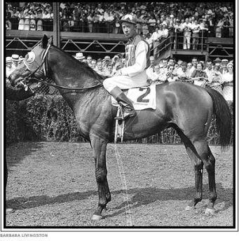 seabiscuit horse