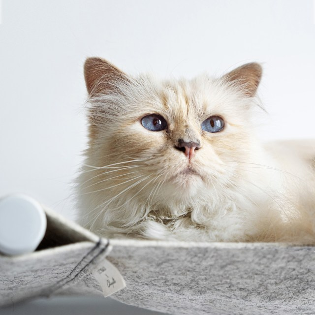 What Karl Lagerfeld's Choupette did next