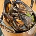 <夏季限定>ムール貝のペール盛り 1kg 約15~20個