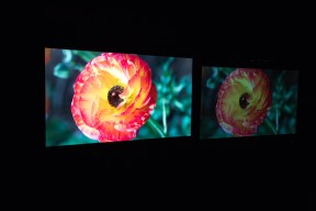 Flower-New Dolby Imaging Tech left and Standard Display right