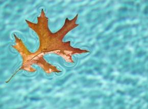 fall-pool-image