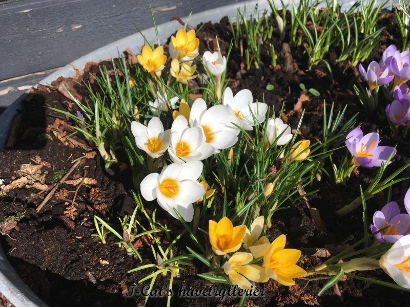 Lidt billeder fra haven
