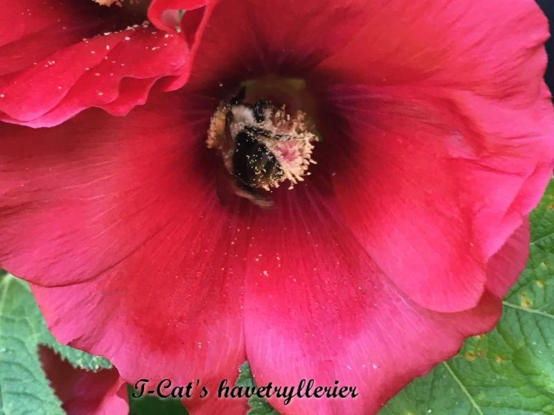Nyder det hele stor i fuld flor