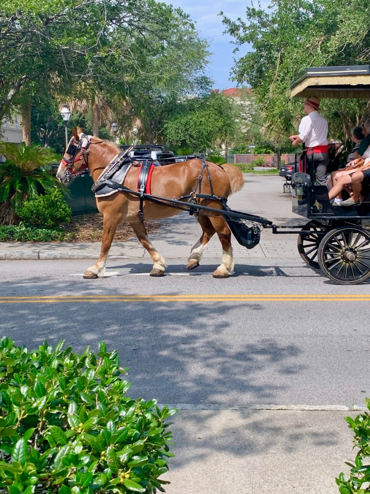 Stop hiring carriage tours. They are one of the worst things about Charleston SC