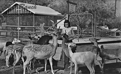 Tucson Country Day School when it was a deer ranch