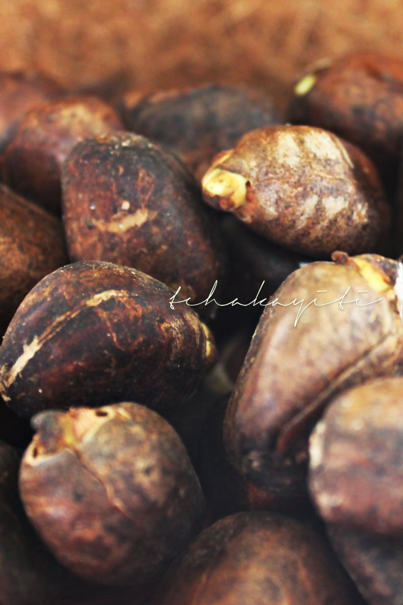 Lapabin, Caribbean Chestnuts or breadnuts are perfect eaten boiled in salty water, in garlic butter, roaster or into a hummus. | tchakayiti.com