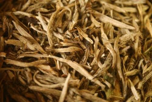 Two Styles of White Tea