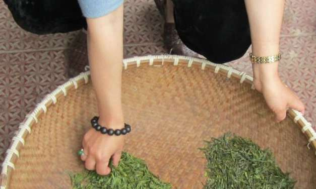 The mysteries of Chinese tea