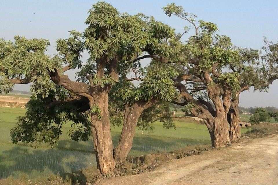 Ancient tea roads
