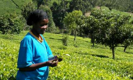 JusTea – A Vancouver-based social justice partnership with Kenyan tea farmers