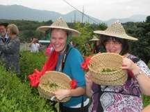 tea-visitors