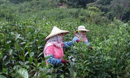 Interview with Taiwanese tea farmer Kevin Liang
