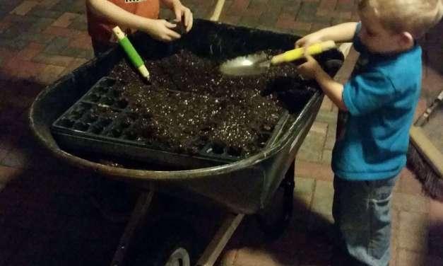 Backyard tea growing