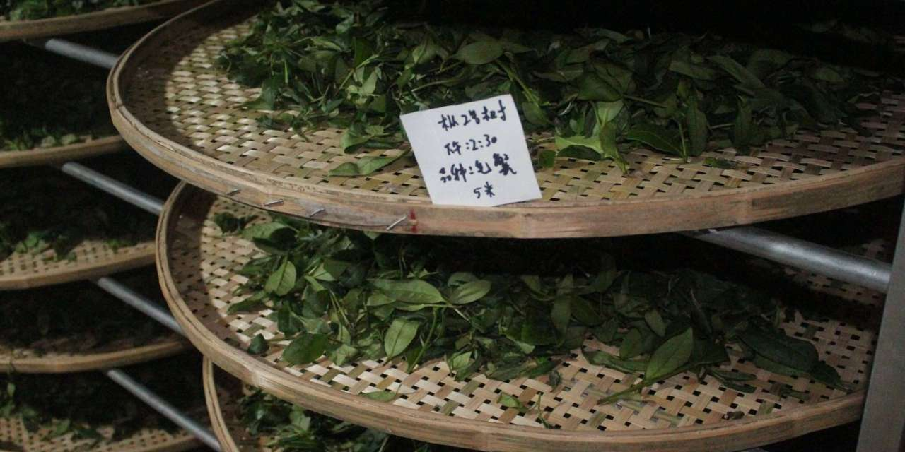 Making Rock Oolong: An Interview with Cindy Chen