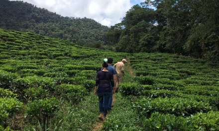 Discovering Colombian Tea
