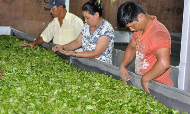 What is Sustainability for Tea: Society