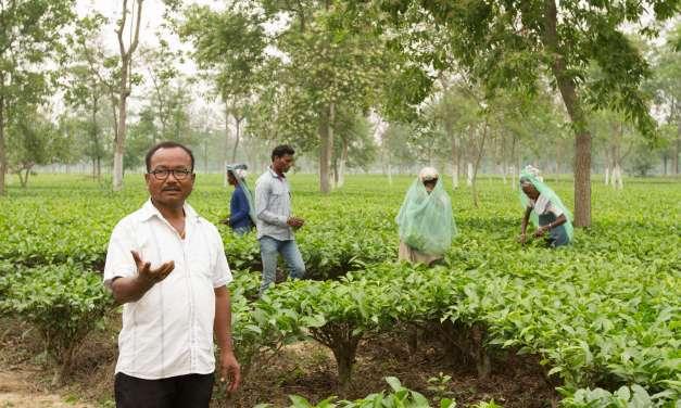 What is Sustainability for Tea: Economics