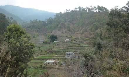 Narendra Kumar Gurung on Developing Local Tea Production in Nepal – Part 2