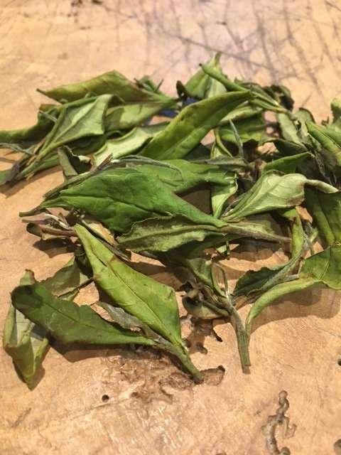 The Japanese White Tea Odyssey – Part 1