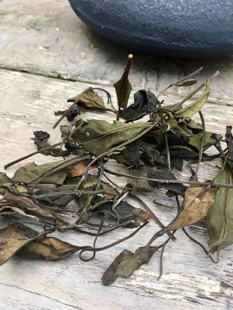 The Japanese White Tea Odyssey - Part 2 - Machine-produced white tea leaves