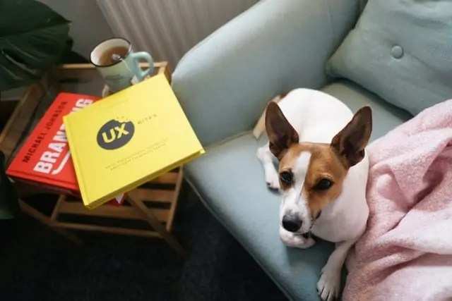 What Can Herbal Tea Do For Your Dog?