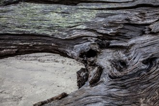 Jekyll Driftwood 26