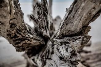 Jekyll Driftwood 33