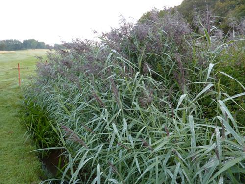 Reeds08