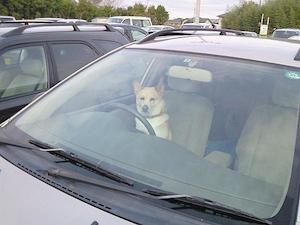 犬 車 ドライブ 注意点 おすすめ6