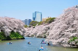 春 東京 ドライブ デート スポット 5