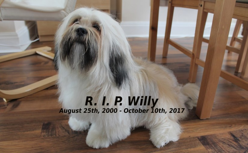 "My dog ""Willy"" died this morning, I'm sooooo sad"