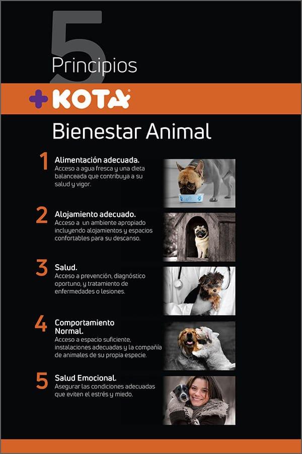 Cartel 5 principios +KOTA-1