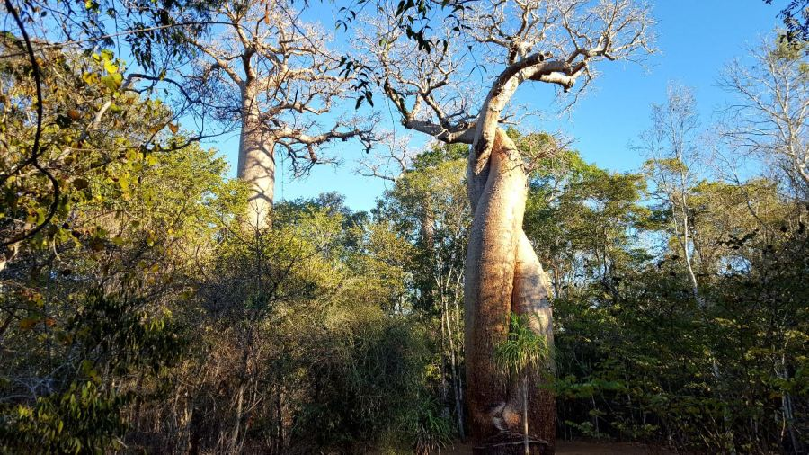 unnamed - The Wonders On The Magical Madagascar Cycling Expedition