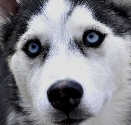 Perro