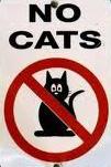 Gatos no