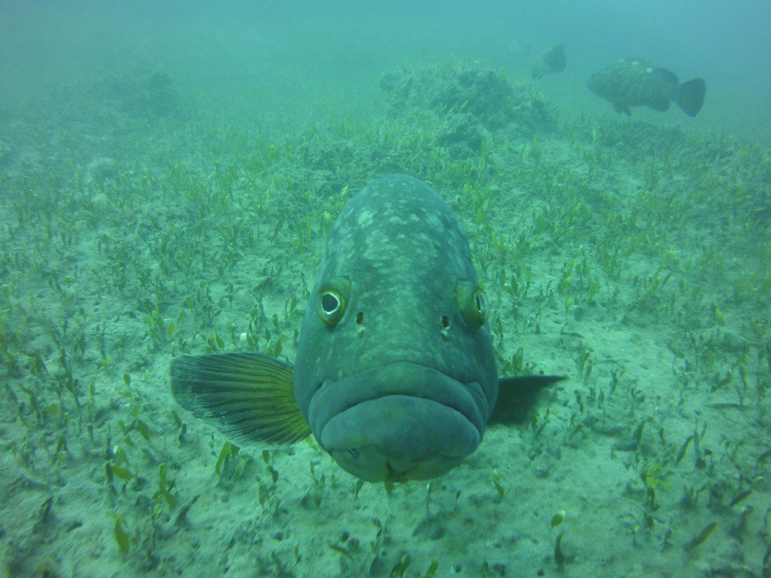 Limassol scuba