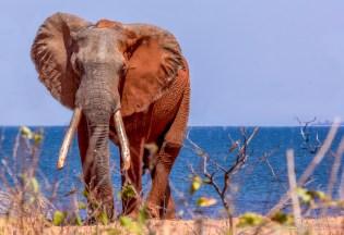 Elephant 11-Edit