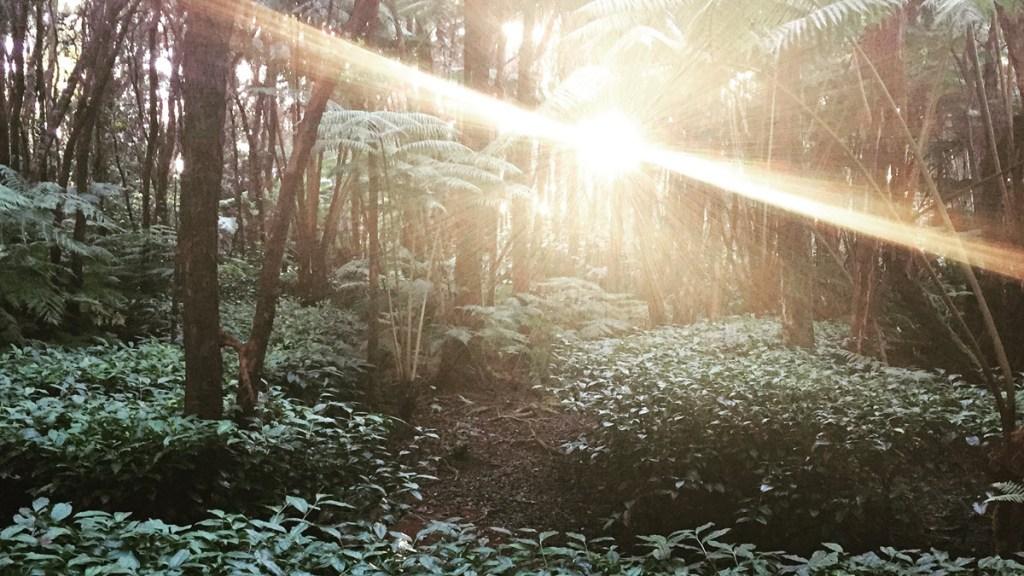 Hawaii Tea Forest Sun