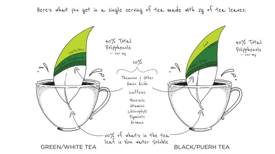 Polyphenols in Tea