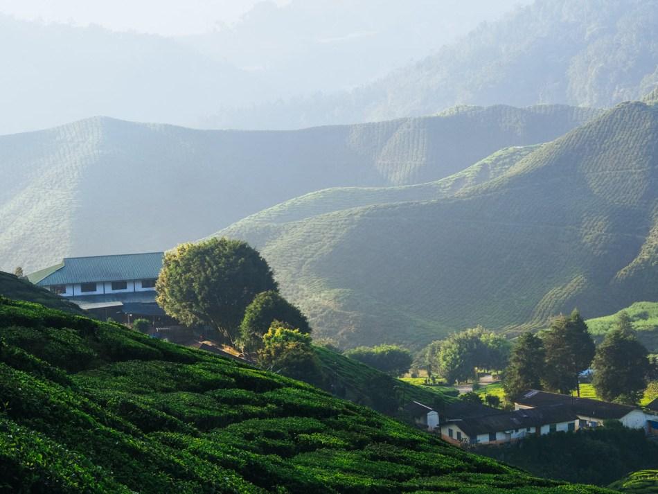 Tea factory and garden in Nepal